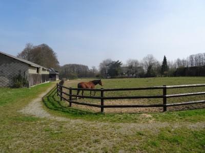 achat d'une propriété normande avec terrain pour chevaux